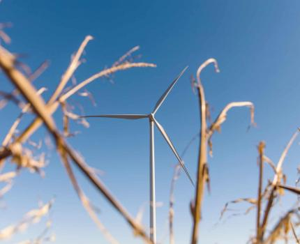 Wind Turbine Wheat